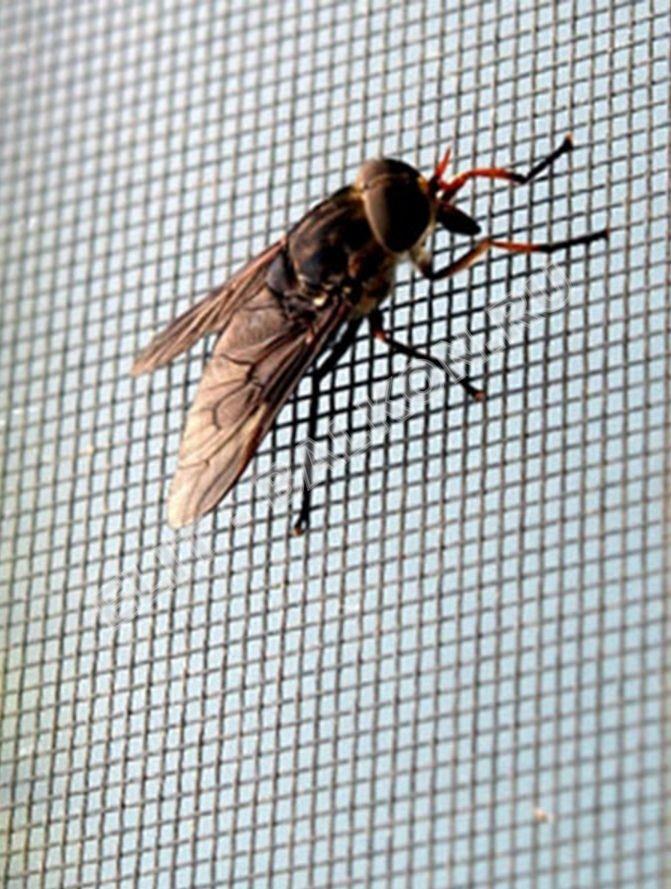Рамочные сетки – надежная защита от насекомых