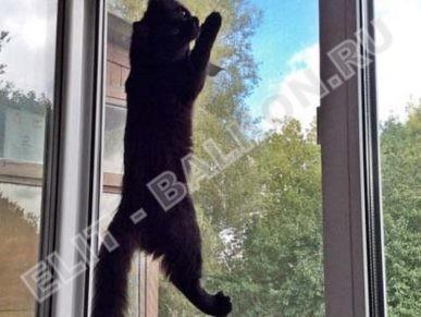 setki mozkitnye antikoshka na okna pvh 24 387x291 - Москитные сетки антикошка на пластиковые окна для балконов и лоджий